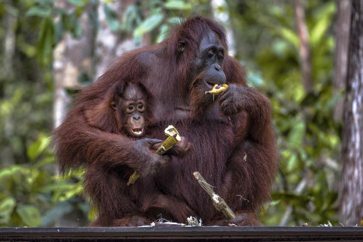 Фото №2 - Что произойдет, если есть по 2 банана каждый день