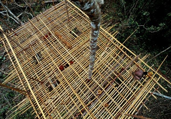 Фото №1 - Обитатели папуасских пентхаусов
