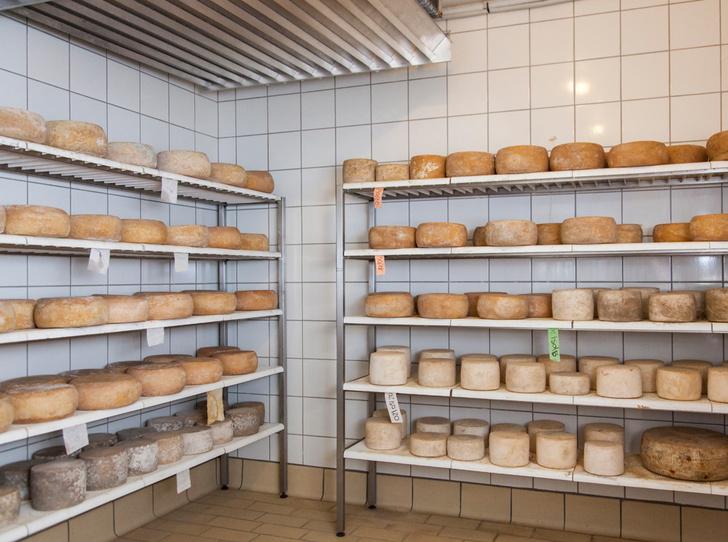 Фото №5 - Сыр пекорино: как его выбрать и довезти до дома
