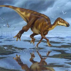 Фото №1 - Танцплощадка для динозавров