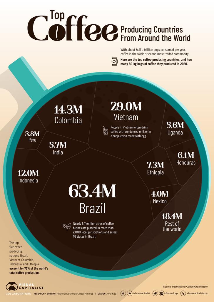 Фото №3 - Инфографика: ведущие страны мира по производству кофе