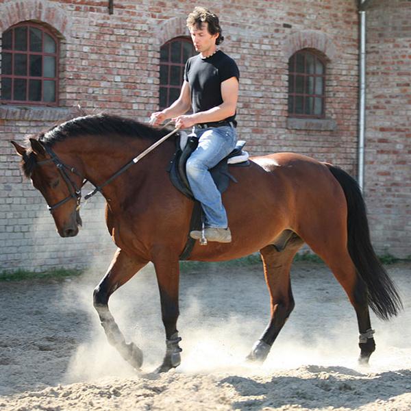 Фото №1 - Где в Рязани покататься на лошадях?