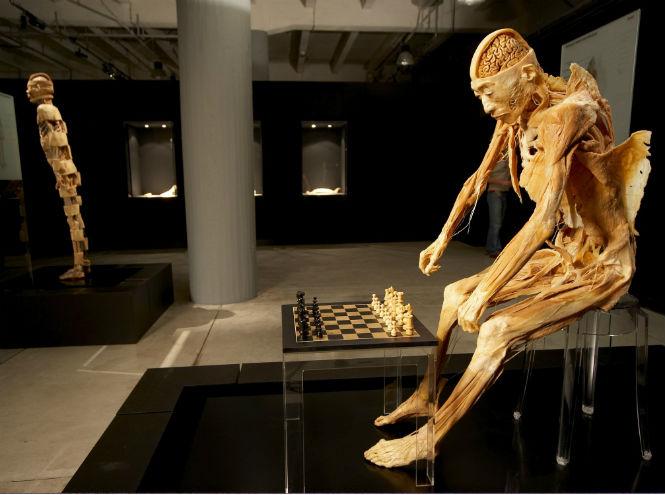Фото №1 - Анатомическая выставка «Тайны тела»