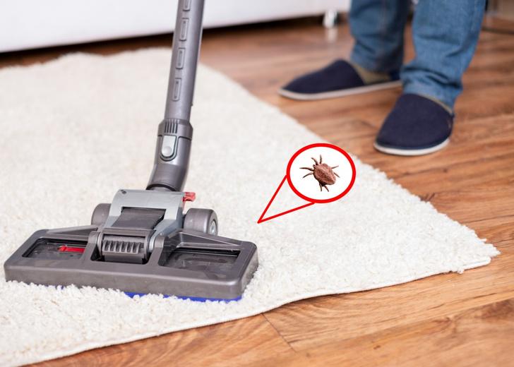 Фото №1 - Как избавиться от ковровых блох: отвечают пользовательницы Woman.ru