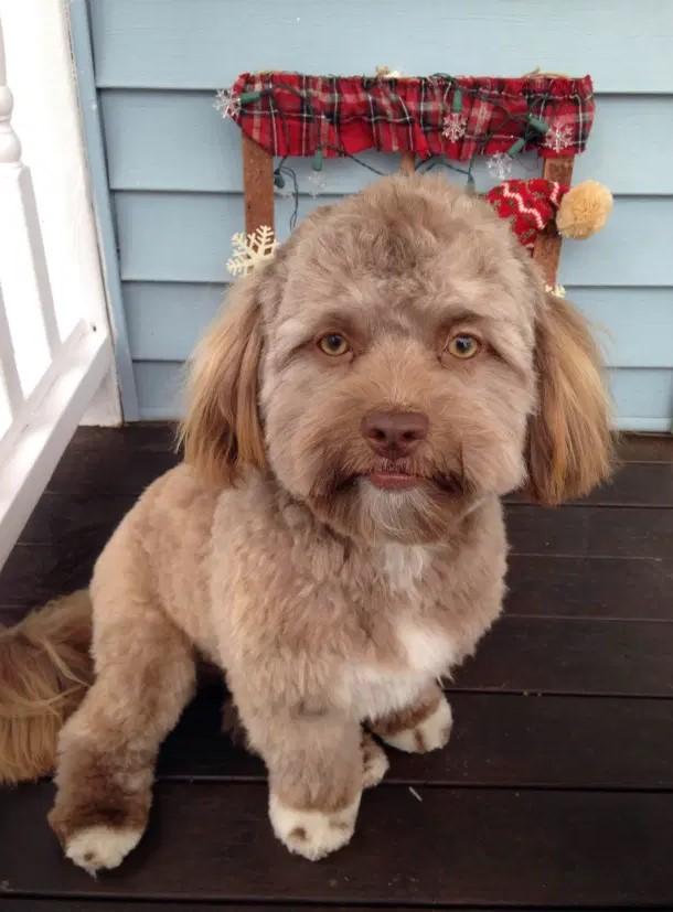 Фото №2 - Реальные собаки, которые выглядят как плохой фотошоп (много фото)