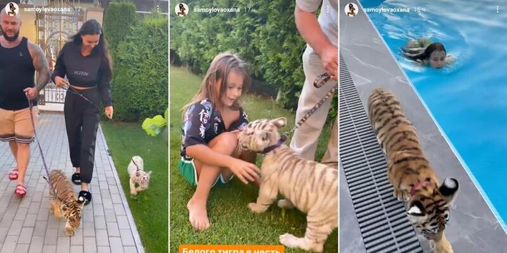 Фото №3 - «Живодерство под милую музыку»: Джигана осудили за видео с тиграми в доме