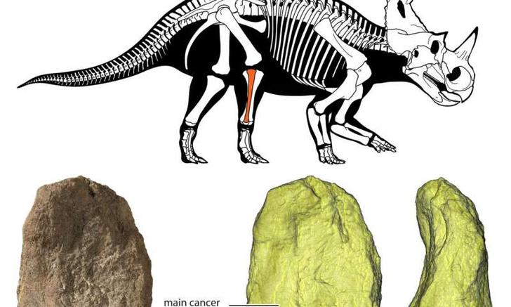 Фото №1 - Ученые обнаружили, что динозавры болели раком