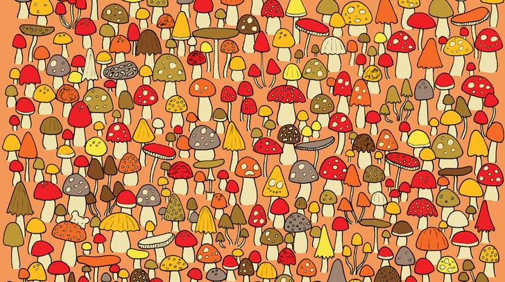 Фото №1 - Головоломка против осенней хандры: отыщи мышь среди грибов