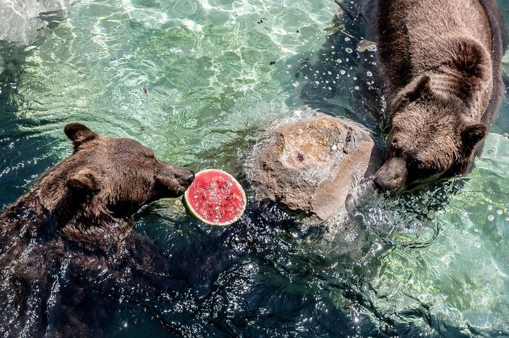 Фото №5 - По лесу идет: 5 интересных фактов о медведях на примере мультсериала «Маша и Медведь»