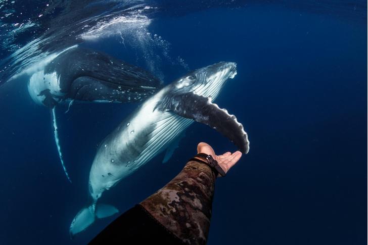 Фото №1 - Знакомство с китом