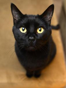 Фото №9 - Тест: Выбери черного котика и получи предсказание от Сабрины Спеллман