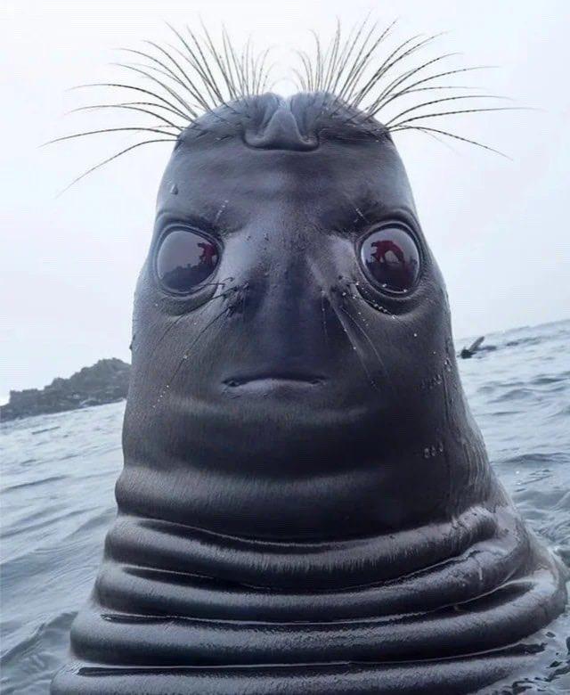 Фото №2 - Странное фото тюленя, похожего на пришельца, разошлось на мемы