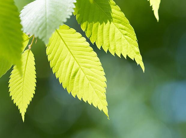 Фото №12 - Самые древние растения планеты