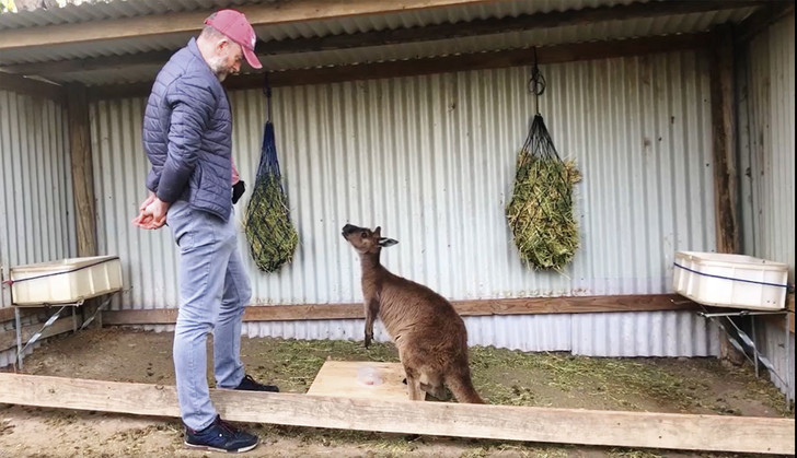 Фото №1 - Зрительный контакт: игры с кенгуру