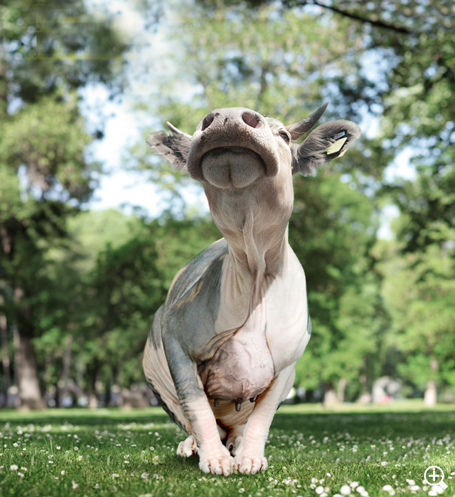 Фото №6 - Только посмотрите на них! 10 самых уродливых животных на Земле