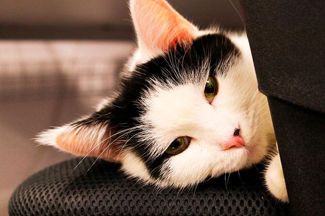 Фото №14 - Коты на службе Ее Величества