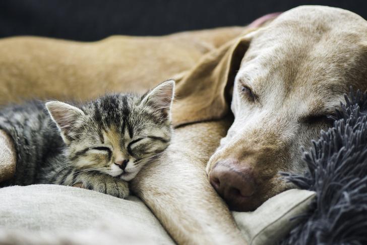 Фото №1 - Ученые выяснили, кто больше любит своих хозяев: кошки или собаки