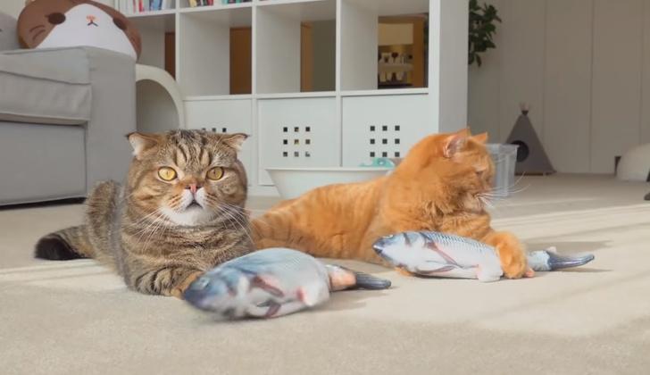 Фото №1 - Коты уморительно играют с заводной рыбой (видео)