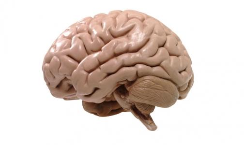 Фото №1 - Ученые считают: душа человека прячется в мозге