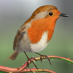 Фото №1 - В больших городах птицы поют по ночам