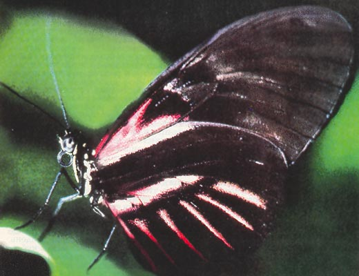 Фото №1 - Дом для бабочек