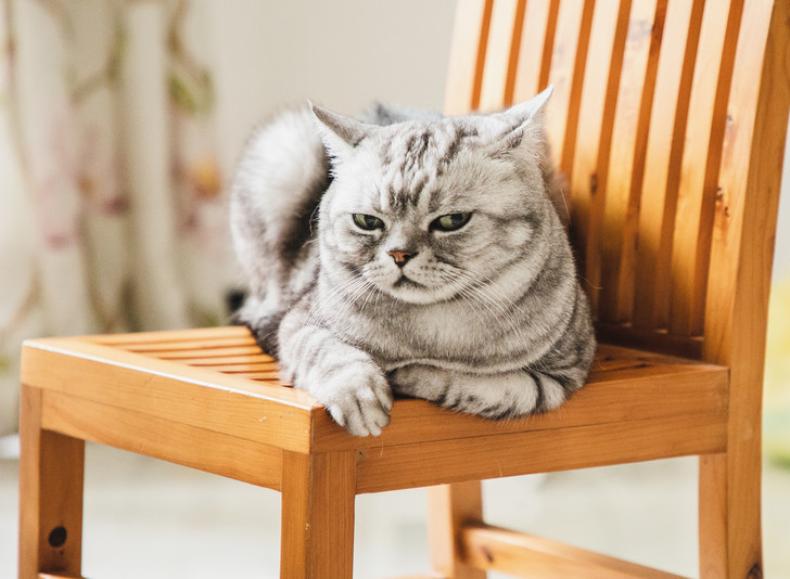 Фото №1 - 9 условий, которые нужно соблюдать, чтобы не раздражать своего кота