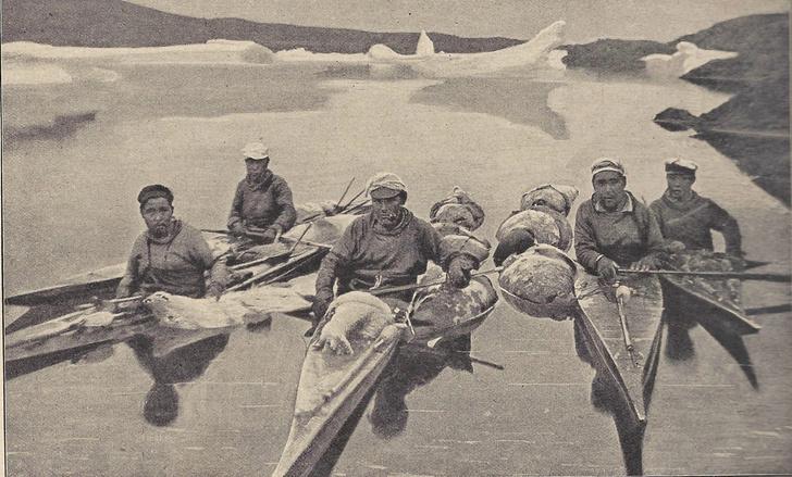 Фото №6 - Зоология: чей в море мех