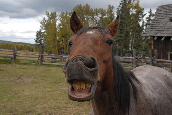 Фото №1 - Монголы лечили зубы лошадям еще три тысячи лет назад