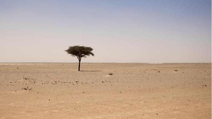 Фото №1 - Как скотоводы повлияли на формирование Сахары