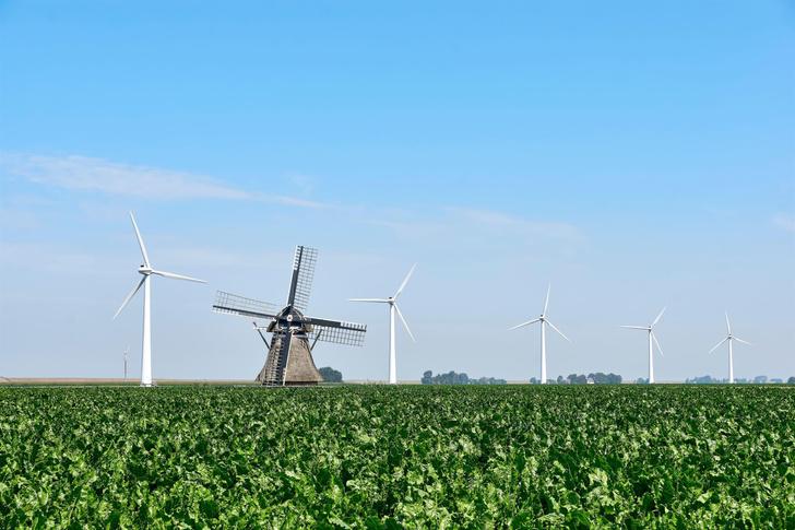Фото №1 - Как правильно: Голландия или Нидерланды?