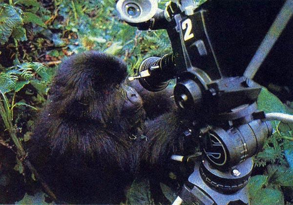 Фото №1 - В кадре — обезьяний народ