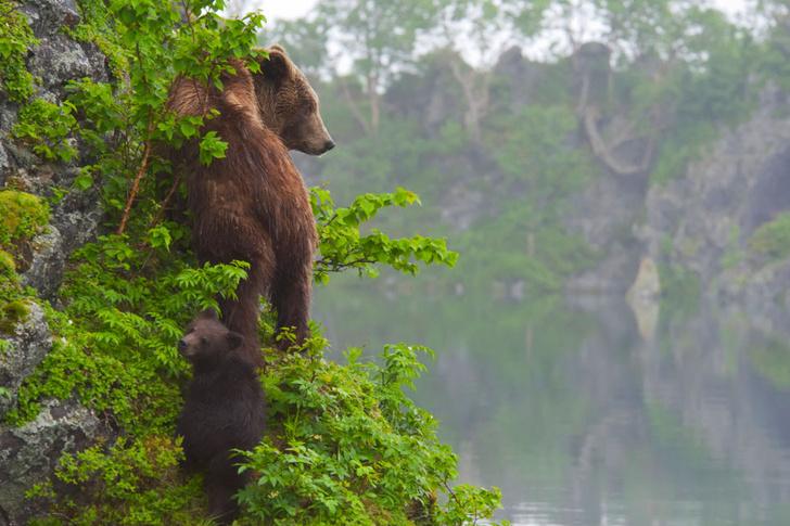 Фото №11 - Фотогалерея: лесные истории