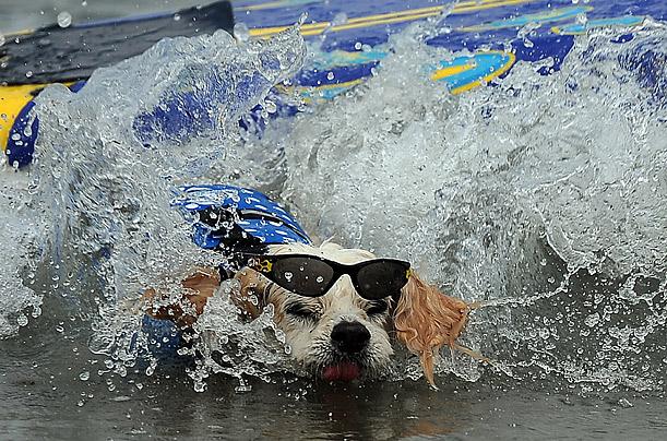 Фото №4 - Отпуск на море: как это делают собаки