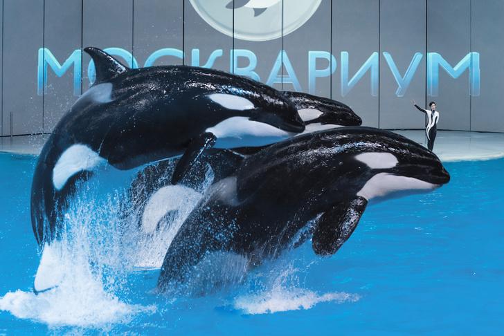 Фото №1 - В «Москвариуме» на ВДНХ покажут новогодний мюзикл с морскими животными и цирковыми артистами