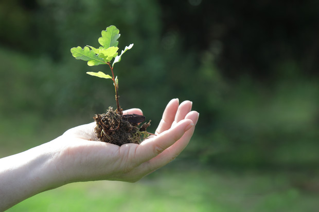 Фото №1 - Необычные средства, минимум влияния на природу: Garnier запускает программу Green Beauty