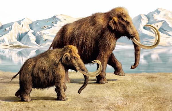Фото №3 - Когда мамонты не были большими