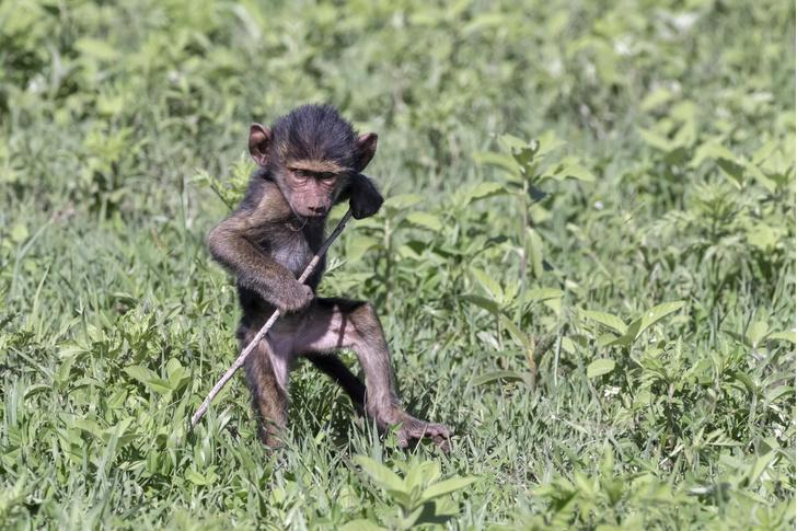 Фото №1 - Один кадр: Танзания