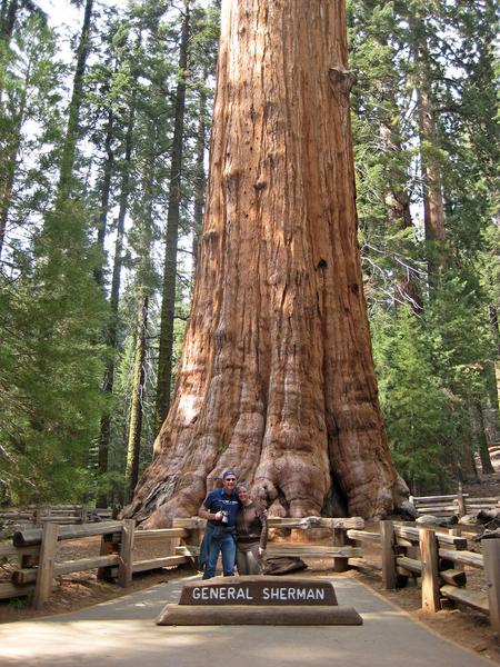 Фото №8 - 9 самых старых деревьев планеты