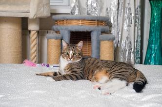 Фото №7 - «Где шесть, там и семь»: кошкин дом Наталии Гулькиной