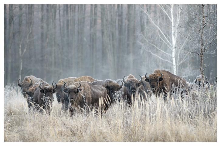 Фото №3 - Лесные истории