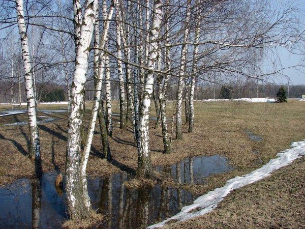 Фото №6 - Фазовый переход от зимы к лету