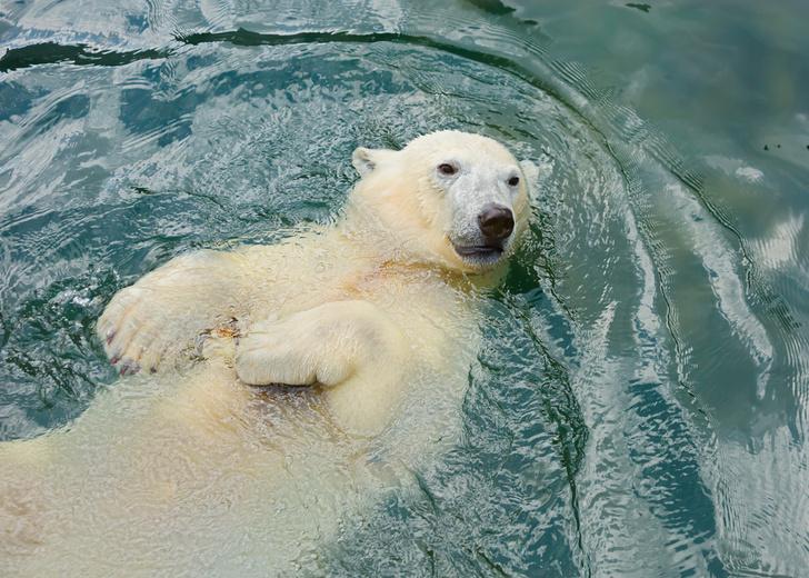 Фото №1 - Когда Арктика лишится льда