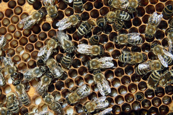 Фото №1 - Wi-Fi негативно влияет на пчел