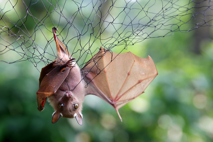 Фото №6 - Источник заразы: животные, которые нас убивают