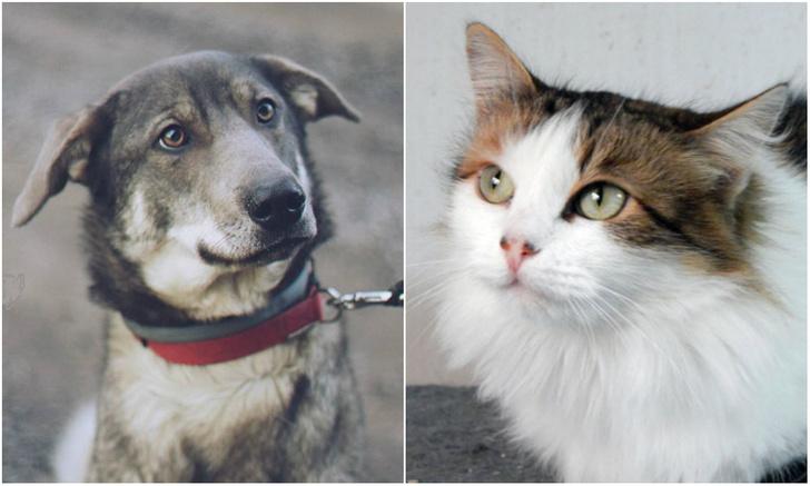 Фото №1 - Котопёс недели: кошка Фрося и собака Мия
