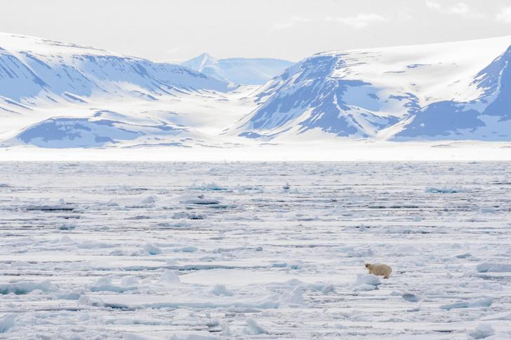 Фото №1 - В Арктике обнаружено множество синтетических волокон