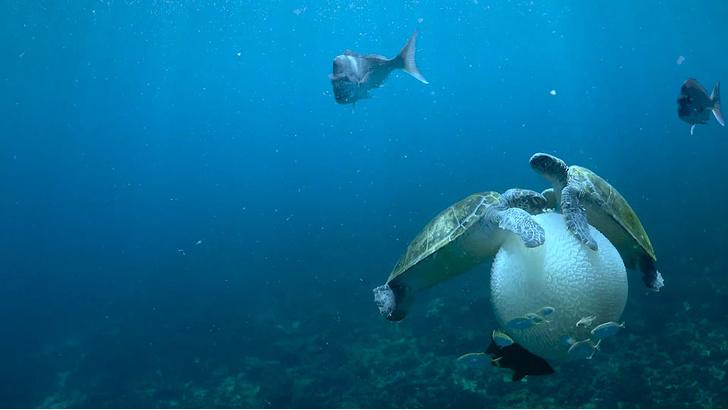 Фото №1 - Морские черепахи научились держать еду ластами