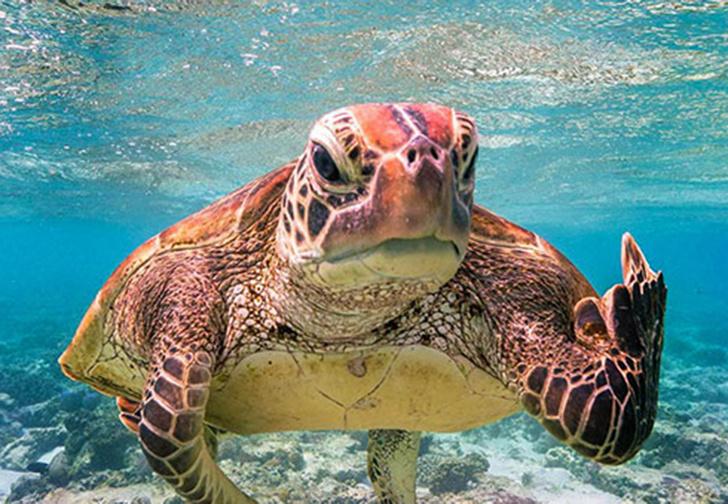 Фото №1 - Объявлены победители конкурса лучших комедийных фото дикой природы (галерея)
