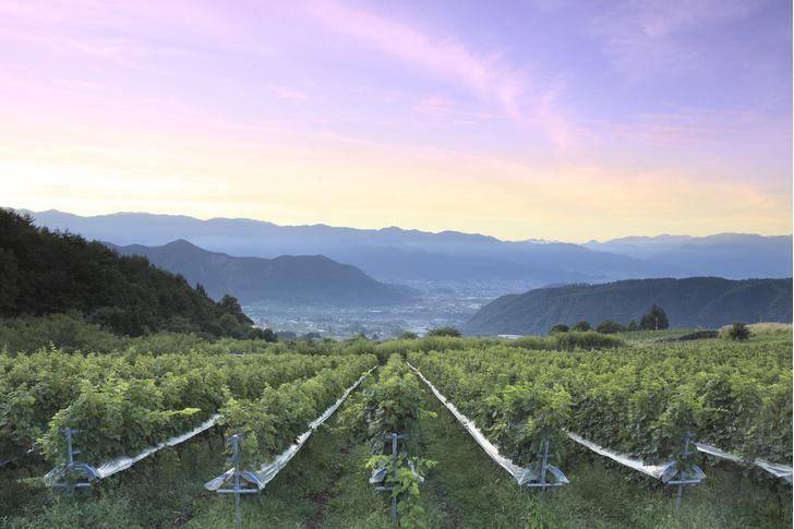 Фото №5 - То в жар, то в холод: 5 необычных мест, где делают вино
