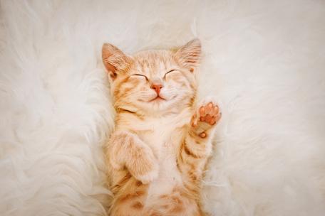 Фото №4 - Тест: Выбери котика, а мы скажем, как ты проведешь выходные